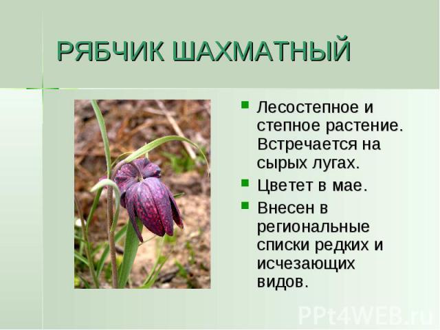 РЯБЧИК ШАХМАТНЫЙ Лесостепное и степное растение. Встречается на сырых лугах.Цветет в мае.Внесен в региональные списки редких и исчезающих видов.