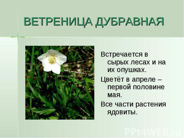 ВЕТРЕНИЦА ДУБРАВНАЯ Встречается в сырых лесах и на их опушках.Цветёт в апреле – первой половине мая.Все части растения ядовиты.