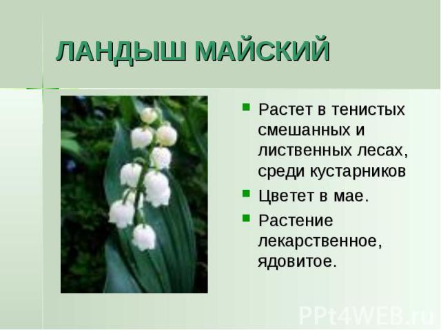 ЛАНДЫШ МАЙСКИЙ Растет в тенистых смешанных и лиственных лесах, среди кустарниковЦветет в мае.Растение лекарственное, ядовитое.