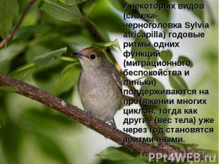 У некоторых видов (славка-черноголовка Sylvia atricapilla) годовые ритмы одних ф