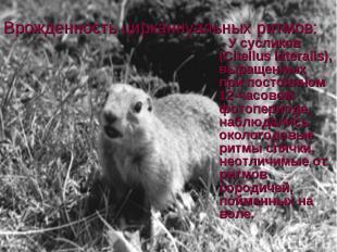Врожденность цирканнуальных ритмов: У сусликов (Citellus lateralis), выращенных