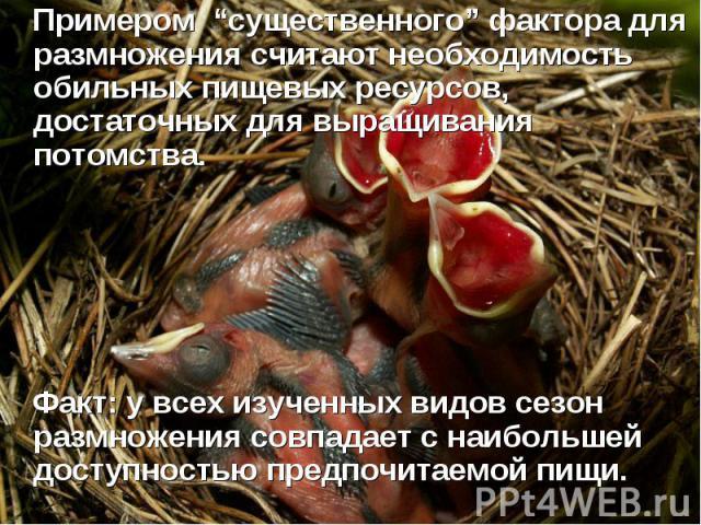 """Примером """"существенного"""" фактора для размножения считают необходимость обильных пищевых ресурсов, достаточных для выращивания потомства. Факт: у всех изученных видов сезон размножения совпадает с наибольшей доступностью предпочитаемой пищи."""