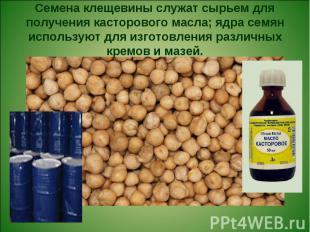 Семена клещевины служат сырьем для получения касторового масла; ядра семян испол