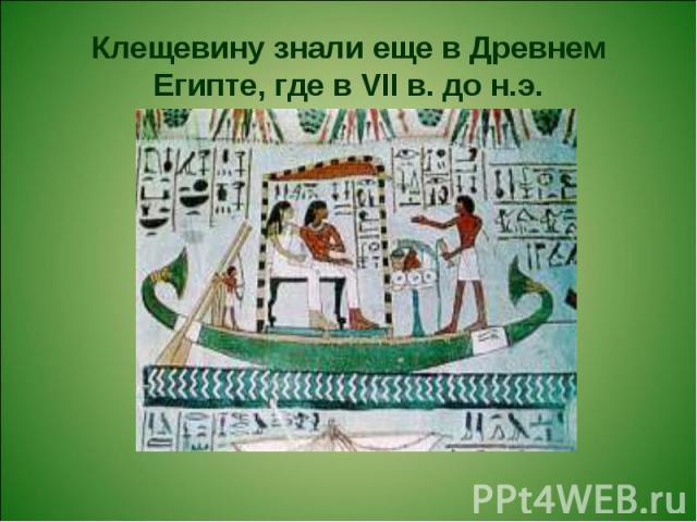 Клещевину знали еще в Древнем Египте, где в VII в. до н.э.