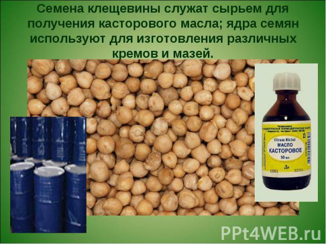 Семена клещевины служат сырьем для получения касторового масла; ядра семян используют для изготовления различных кремов и мазей.