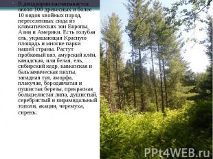 В дендрарии насчитывается около 100 древесных и более 10 видов хвойных пород, пе