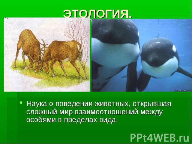 ЭТОЛОГИЯ. Наука о поведении животных, открывшая сложный мир взаимоотношений между особями в пределах вида.
