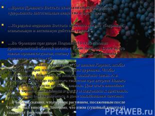 …Врачи Древнего Востока отмечали свойство рябины «удерживать питательные веществ