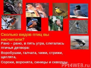 Сколько видов птиц вы насчитали? Рано – рано, в пять утра, слеталась птичья детв