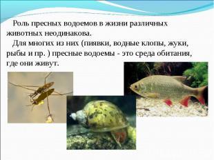 Роль пресных водоемов в жизни различных животных неодинакова. Для многих из них