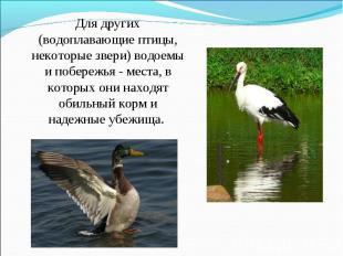 Для других (водоплавающие птицы, некоторые звери) водоемы и побережья - места, в