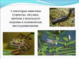А некоторые животные (стрекозы, лягушки, тритоны ) используют водоемы в основном