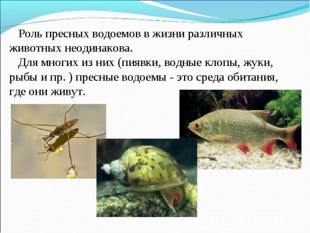 Роль пресных водоемов в жизни различных животных неодинакова. Для многих из них (пиявки, водные клопы, жуки, рыбы и пр. ) пресные водоемы - это среда обитания, где они живут.