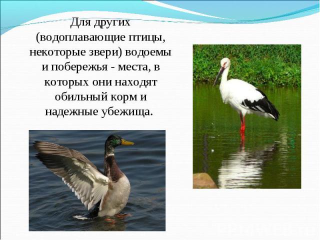 Для других (водоплавающие птицы, некоторые звери) водоемы и побережья - места, в которых они находят обильный корм и надежные убежища.