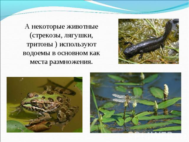 А некоторые животные (стрекозы, лягушки, тритоны ) используют водоемы в основном как места размножения.