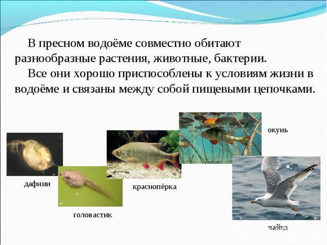 В пресном водоёме совместно обитают разнообразные растения, животные, бактерии. Все они хорошо приспособлены к условиям жизни в водоёме и связаны между собой пищевыми цепочками.