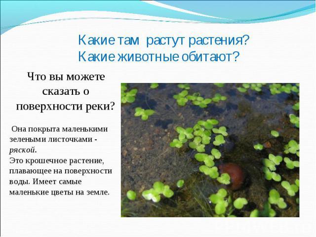 Какие там растут растения? Какие животные обитают?Что вы можете сказать о поверхности реки? Она покрыта маленькими зелеными листочками - ряской.Это крошечное растение, плавающее на поверхности воды. Имеет самые маленькие цветы на земле.