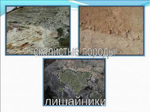 скалистые породылишайники
