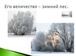 Его величество - зимний лес.