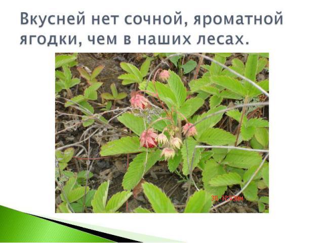 Вкусней нет сочной, яроматной ягодки, чем в наших лесах.