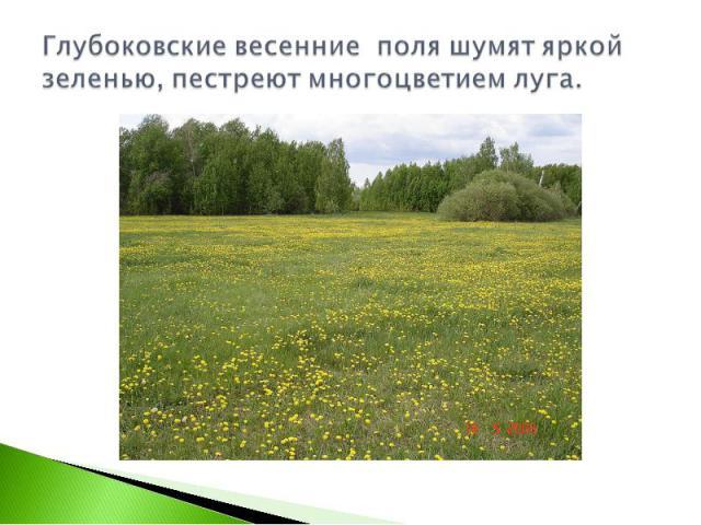 Глубоковские весенние поля шумят яркой зеленью, пестреют многоцветием луга.