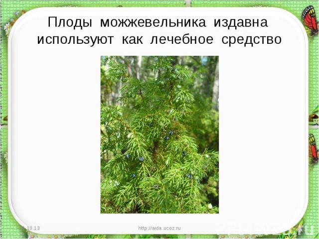 Плоды можжевельника издавна используют как лечебное средство