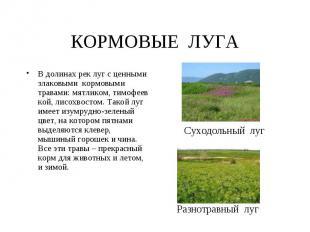 КОРМОВЫЕ ЛУГА В долинах рек луг с ценными злаковыми кормовыми травами: мятликом,
