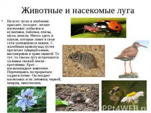 Животные и насекомые луга На всех лугах в изобилии прыгают, ползают, летают насе
