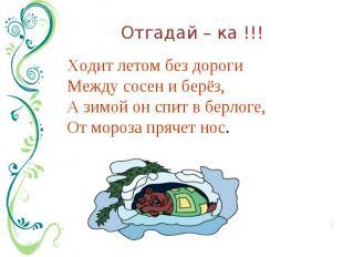 Отгадай – ка !!! Ходит летом без дорогиМежду сосен и берёз, А зимой он спит в бе