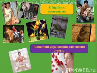 Общайся с животнымиВыполняй упражнения для снятия стресса