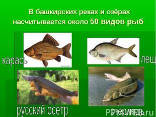 В башкирских реках и озёрах насчитывается около 50 видов рыб