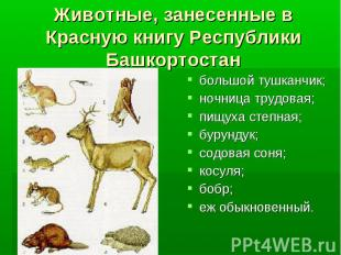 Животные, занесенные в Красную книгу Республики Башкортостан большой тушканчик;