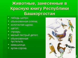 Животные, занесенные в Красную книгу Республики Башкортостан лебедь-шипун;обыкно