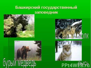 Башкирский государственный заповедник
