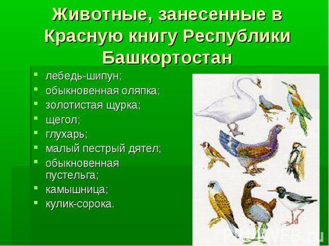 Животные, занесенные в Красную книгу Республики Башкортостан лебедь-шипун;обыкновенная оляпка; золотистая щурка;щегол;глухарь;малый пестрый дятел;обыкновенная пустельга;камышница;кулик-сорока.