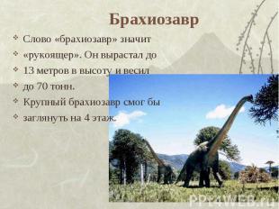Брахиозавр Слово «брахиозавр» значит «рукоящер». Он вырастал до13 метров в высот