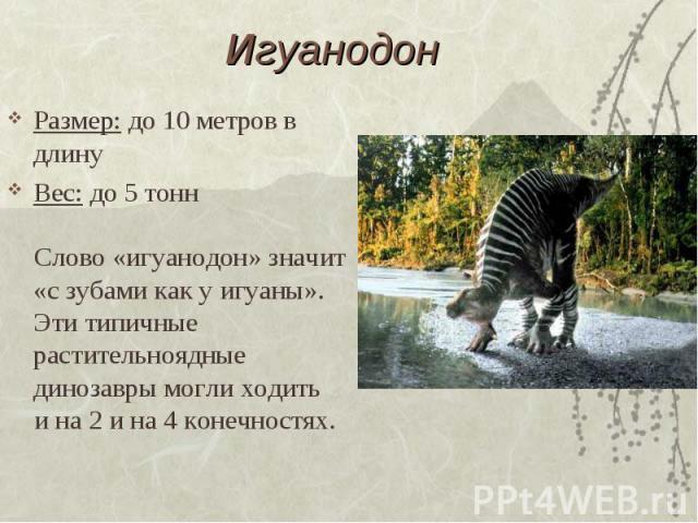 Игуанодон Размер: до 10 метров в длинуВес: до 5 тонн Слово «игуанодон» значит «с зубами как у игуаны». Эти типичные растительноядные динозавры могли ходить и на 2 и на 4 конечностях.