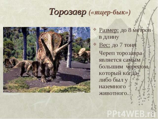 Торозавр («ящер-бык») Размер: до 8 метров в длинуВес: до 7 тоннЧереп торозавра является самым большим черепом, который когда-либо был у наземного животного.