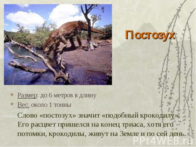 Постозух Размер: до 6 метров в длинуВес: около 1 тонныСлово «постозух» значит «подобный крокодилу». Его расцвет пришелся на конец триаса, хотя его потомки, крокодилы, живут на Земле и по сей день.
