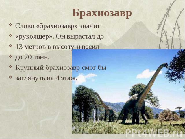 Брахиозавр Слово «брахиозавр» значит «рукоящер». Он вырастал до13 метров в высоту и весил до 70 тонн. Крупный брахиозавр смог бы заглянуть на 4 этаж.