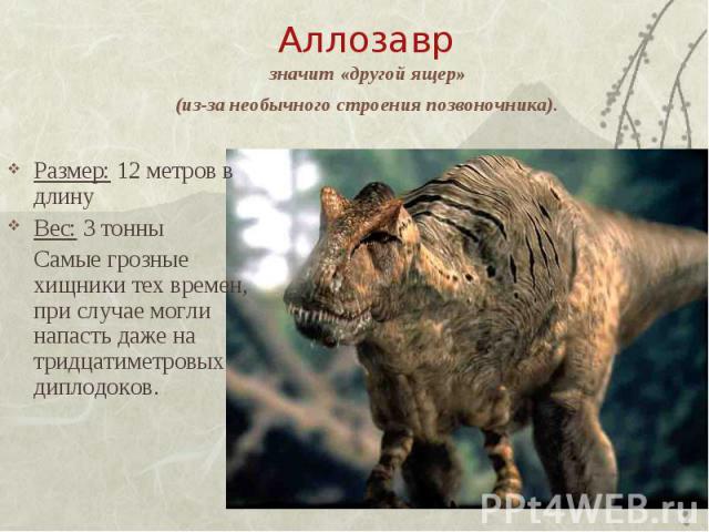 Аллозавр значит «другой ящер» (из-за необычного строения позвоночника). Размер: 12 метров в длинуВес: 3 тонныСамые грозные хищники тех времен, при случае могли напасть даже на тридцатиметровых диплодоков.
