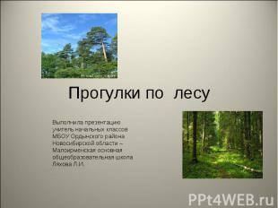 Прогулки по лесу Выполнила презентацию учитель начальных классов МБОУ Ордынского