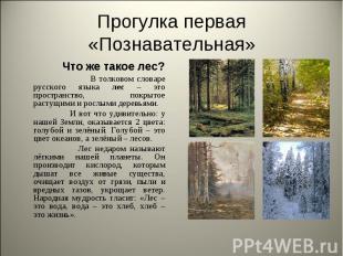 Прогулка первая «Познавательная» Что же такое лес? В толковом словаре русского я