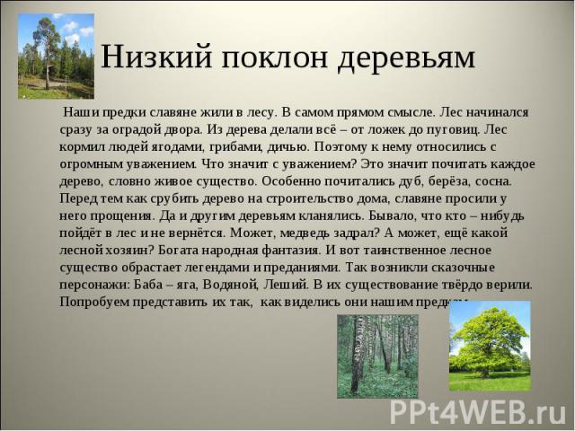 Низкий поклон деревьям Наши предки славяне жили в лесу. В самом прямом смысле. Лес начинался сразу за оградой двора. Из дерева делали всё – от ложек до пуговиц. Лес кормил людей ягодами, грибами, дичью. Поэтому к нему относились с огромным уважением…