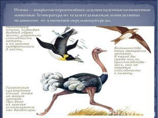 Птицы — покрытые перьями яйцекладущие наземные позвоночные животные. Температура