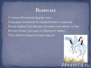 Выводы У птиц обтекаемая форма тела.Передние конечности превратились в крылья.Кл