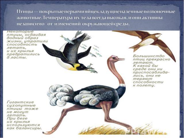 Птицы — покрытые перьями яйцекладущие наземные позвоночные животные. Температура их тела всегда высокая, и они активны независимо от изменений окружающей среды.