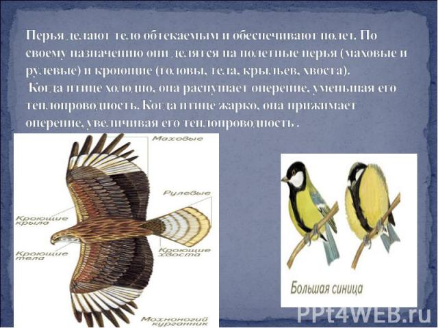 Перья делают тело обтекаемым и обеспечивают полет. По своему назначению они делятся наполетные перья (маховые и рулевые) и кроющие (головы, тела, крыльев, хвоста). Когда птице холодно, она распушает оперение, уменьшая его теплопроводность. Когда пт…