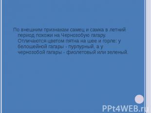 По внешним признакам самец и самка в летний период похожи на Чернозобую гагару.