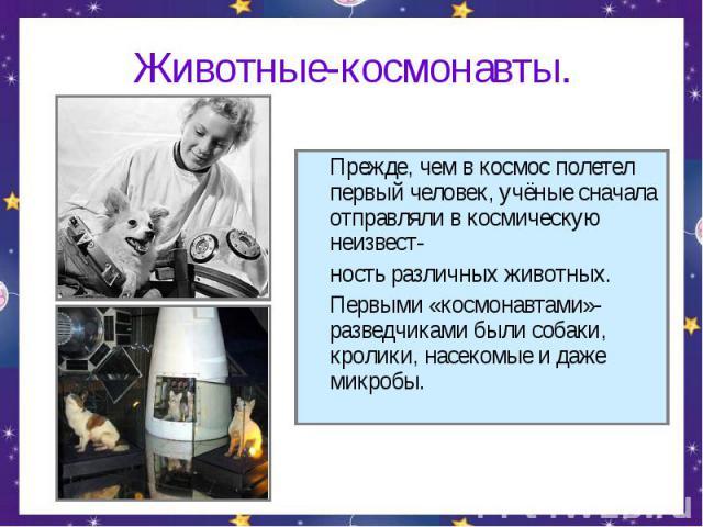 Животные-космонавты. Прежде, чем в космос полетел первый человек, учёные сначала отправляли в космическую неизвест-ность различных животных.Первыми «космонавтами»-разведчиками были собаки, кролики, насекомые и даже микробы.